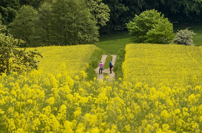 Bordesholm, Bissee, Bothkamper See, Schleswig Holstein, Deutschland, Norddeutschland