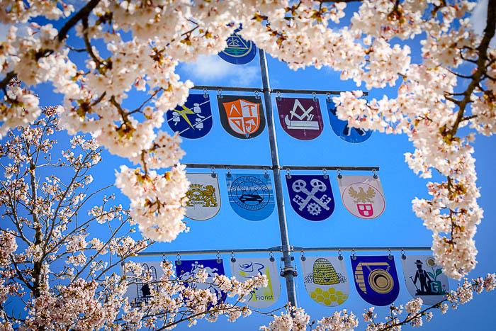 . Blütenpracht, Maibaum vor dem Rathaus am 31.03.2020 in Bordesholm, Mühlenstraße 7, Bordesholmer Rathaus, Photo: Michael Slogsnat, Bordesholm.
